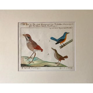Antique Watercolor Birds Ornithological Study 18th Century Preview