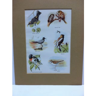 "1960 ""Birds"" Matted Color Animal Print Preview"