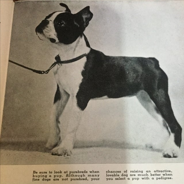 Black 1937 Book, Your Dog His Care & Training For Sale - Image 8 of 9