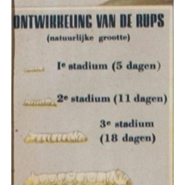 Framed Belgian Vintage Chart of White Moth - Image 3 of 5