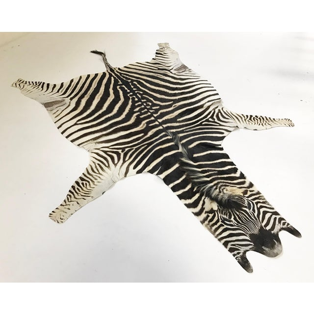 Zebra Hide Rug - 5′9″ × 7′4″ - Image 2 of 4