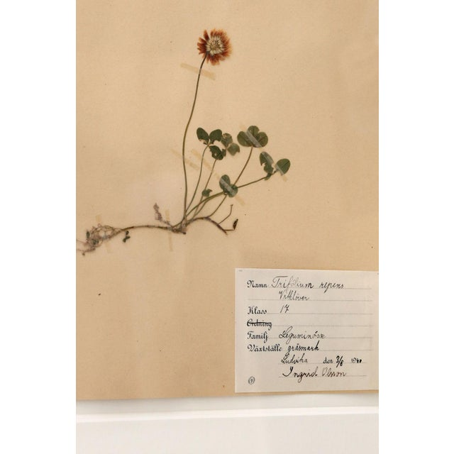 Framed Set of Four Herbaria For Sale - Image 10 of 13