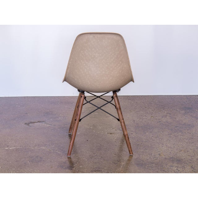 Herman Miller Eames Fiberglass Greige Shell Chairs on Walnut Dowel Base For Sale - Image 4 of 7