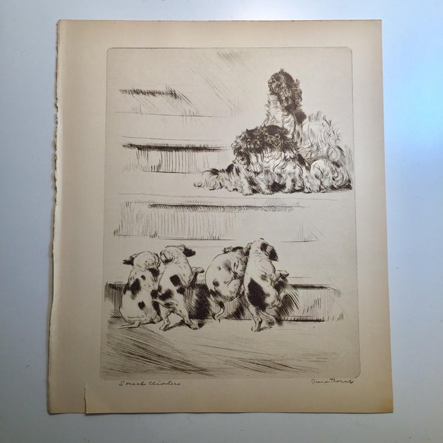 This is a vintage book illustration of an etching by noted animal artist, Diana Thorne. It has been carefully removed from...