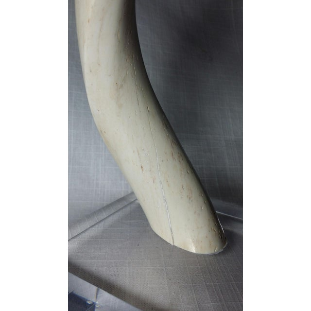 Kudu Horn Inner Bone on Lucite For Sale - Image 5 of 5