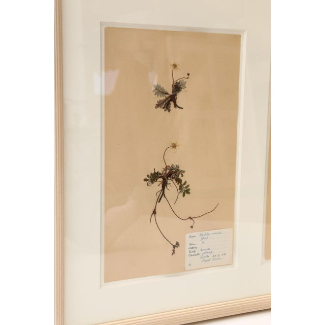 1930s Framed Set of Four Herbaria For Sale - Image 5 of 13