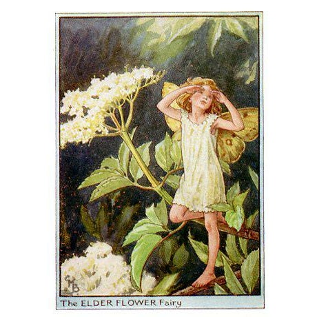 Illustration Vintage Flower Fairies of the Trees, Set of 3 Prints For Sale - Image 3 of 5