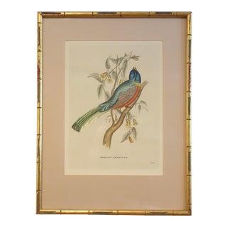 "Antique ""Trogon Ambiguus"" Bird Print by J. Gould, 1875 For Sale"