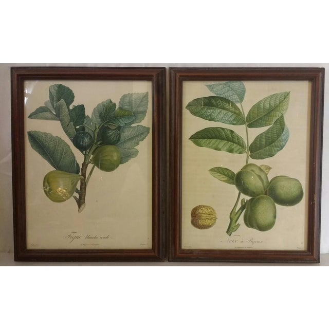 French Botanical Fruit Prints - A Pair - Image 2 of 9