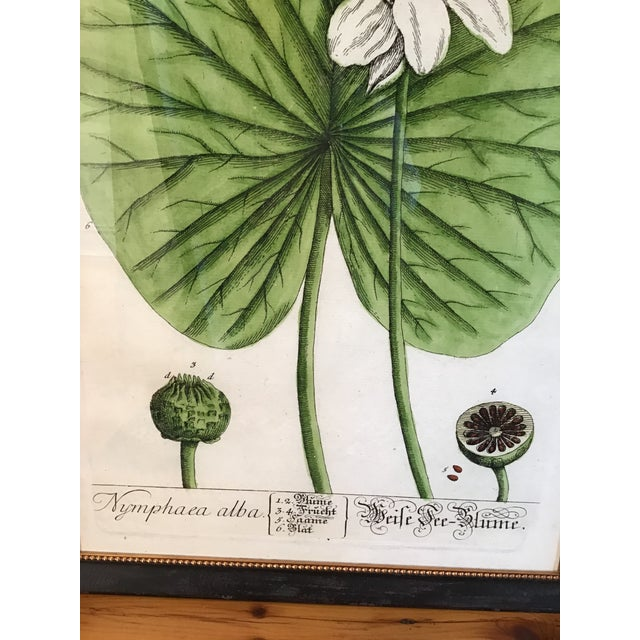 Botanical artwork print inspired by French painter Turpin Pierre. Print professionally framed in beautiful rich ebonized...