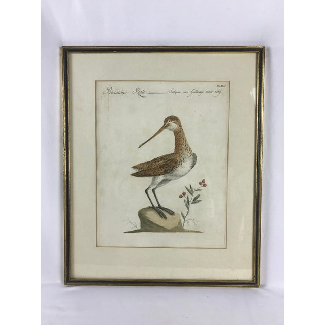 Late 18th Century 18th Century Snipe Bird Print Hand Colored Engraving by Saverio Manetti For Sale - Image 5 of 5