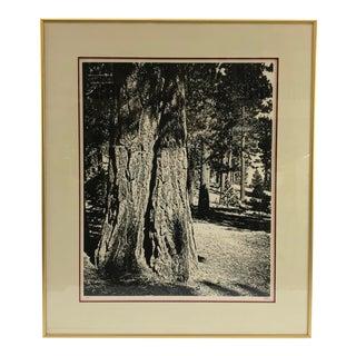 Framed Black & White Artist Proof Print of Forest - Signed For Sale