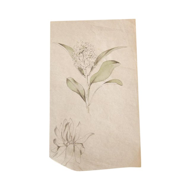 Antique Dainty Flower Watercolor Drawing - Image 1 of 4