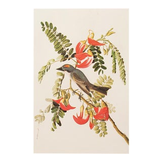 1966 Gray Kingbird by John James Audubon For Sale