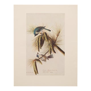 Tufted Titmouse by Audubon, 1966 Lithograph
