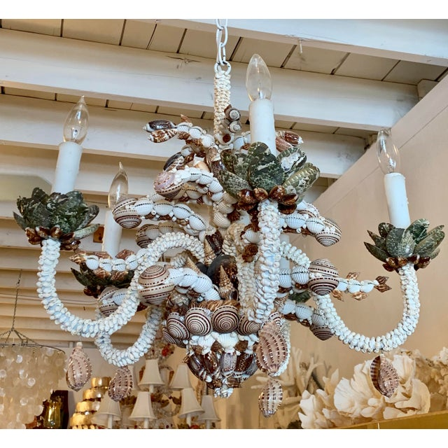 2010s Natural Five-Light Brown and White Shell Chandelier For Sale - Image 5 of 5