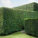 "Image of ""Hedge #10"" Contemporary Landscape Photograph on Paper by Carol Erb For Sale"