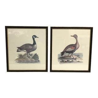 Framed Duck Etchings - A Pair