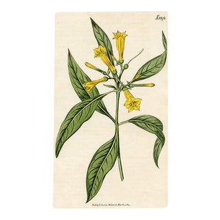 Large-Flowered Hamelia, 1827 Curtis Botanical Print For Sale