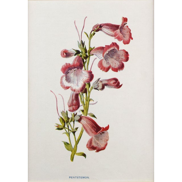 White Antique English Botanical Prints by Hulme C.1900 - Set of 6 For Sale - Image 8 of 13