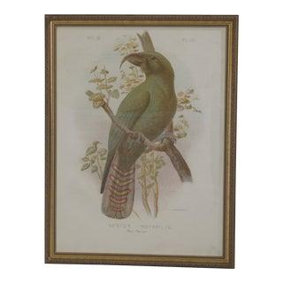 1990s Vintage Framed Parrot Bird Print For Sale