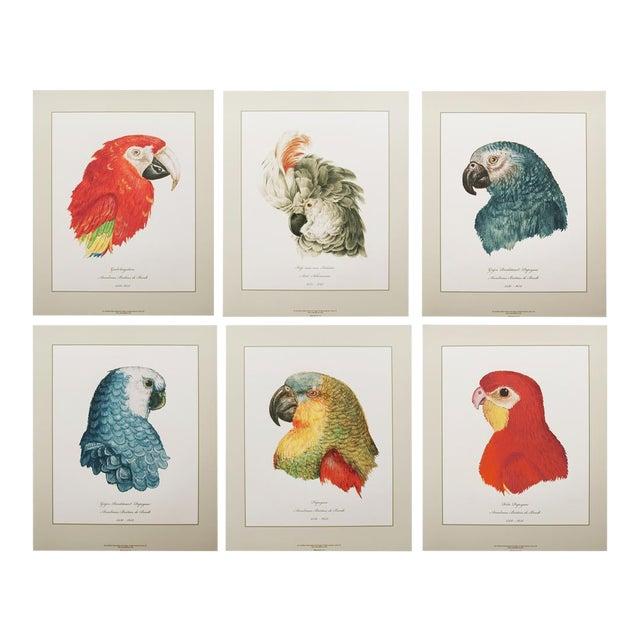 Anselmus De Boodt & Aert Shoumann, 16-18th C. Parrot Head Study Prints - Large Set of 6 For Sale