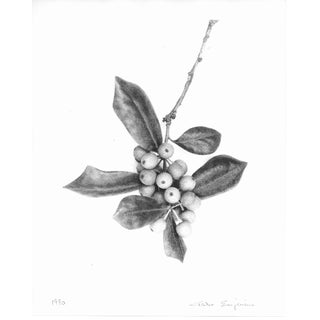 Holly Berry Still Life Black and White Photograph by Garo 1990s For Sale