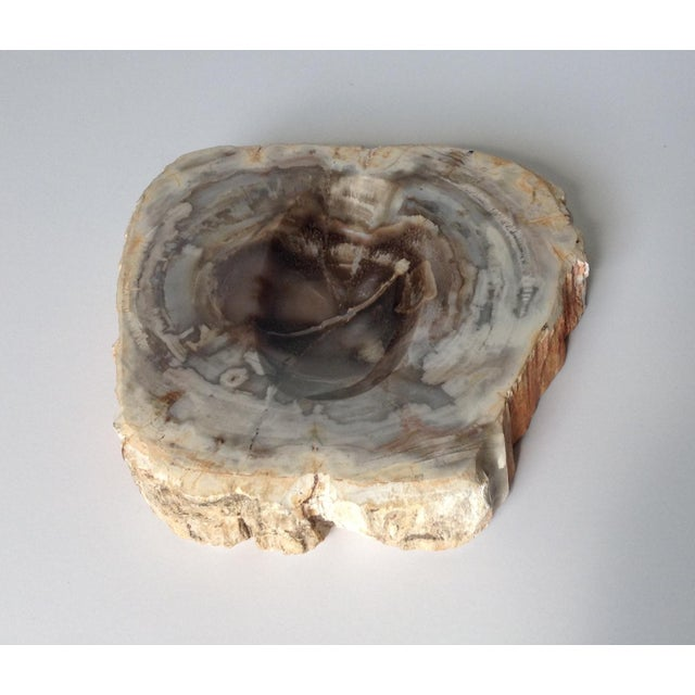 Vinatge Polished Petrified Wood Coved Catchall Dish - Image 6 of 11