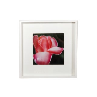Framed Shadow Box Red Floral Photography For Sale