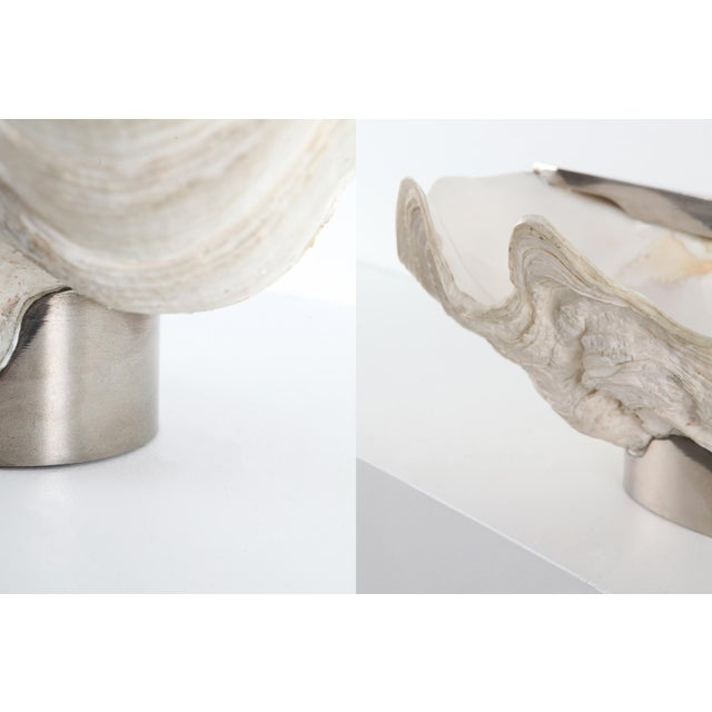 Metal Mounted Giant Clam Shell in the Style of Gabrielle Crespi - 1950s For Sale - Image 7 of 9
