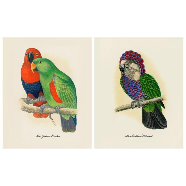 2010s 1884 Alexander Francis Lydon, Parrot Reproduction Set of 12, N1 For Sale - Image 5 of 11