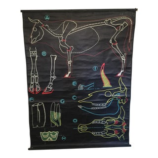 Antique French Cow Cattle Bull Anatomy Chart