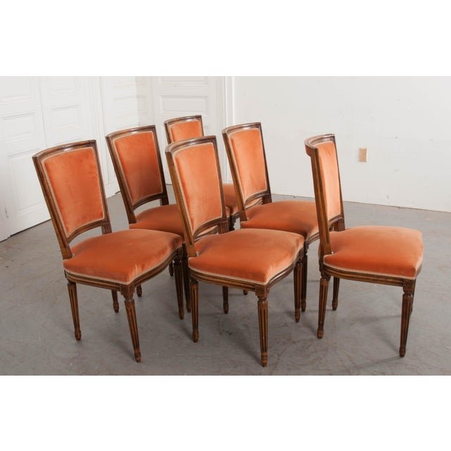 19th Century French 19th Century Louis XVI-Style Walnut Sidechairs-Set of 6 For Sale - Image 5 of 12