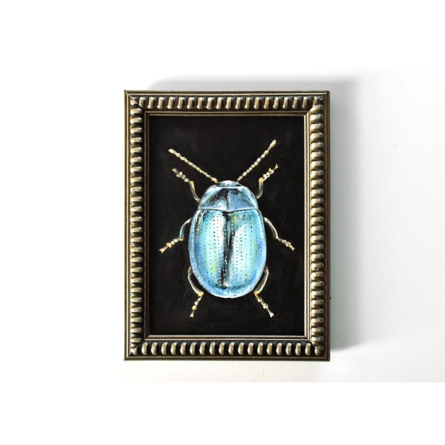 A contemporary oil painting of a light blue beetle in traditional taxidermy style, in a beaded silver frame.with both a...