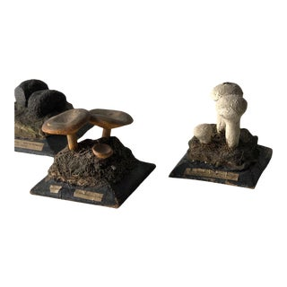 19th Century Mushroom Study Aids For Sale