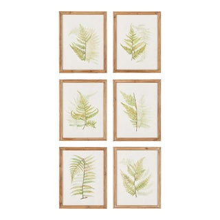 Framed Fern Study Prints - 6 Pieces For Sale