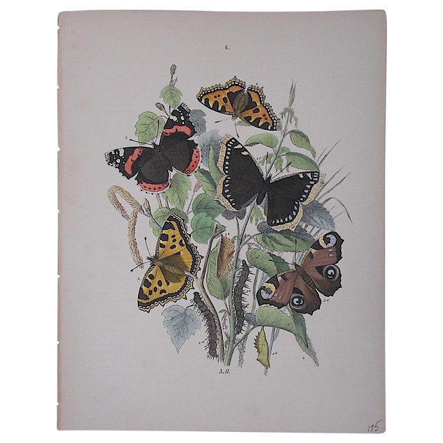 Antique Chromolithograph Butterflies/Moths - Image 1 of 3