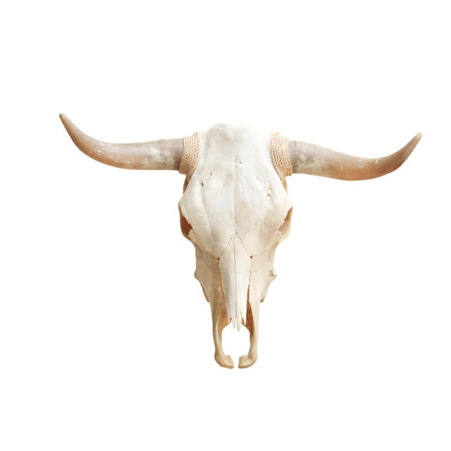 White Authentic Longhorn Steer Skull For Sale - Image 8 of 8