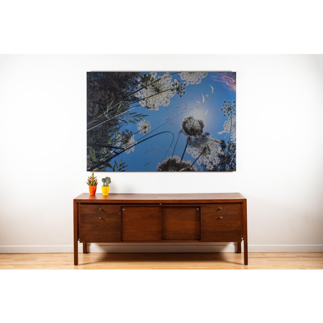 Lekha Singh Weeds 3 2014 Photograph on brushed aluminum Edition of 10 Note: Art elegantly floats off of wall with a simple...