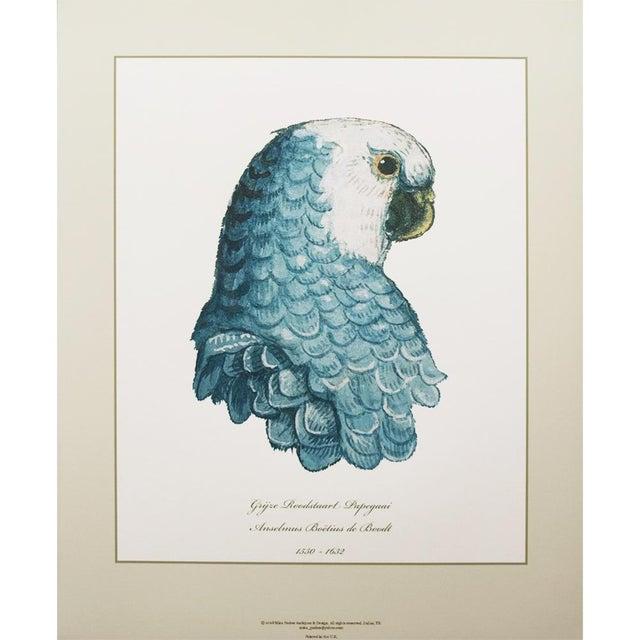 2010s Anselmus De Boodt & Aert Shoumann, 16-18th C. Parrot Head Study Prints - Large Set of 6 For Sale - Image 5 of 10
