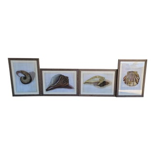 Set of 4 Large Williams Sonoma Nautical Sea Shell Prints For Sale