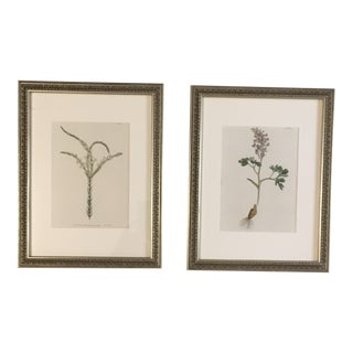 Framed 19th Century Hand-Colored Botanical Prints - a Pair For Sale