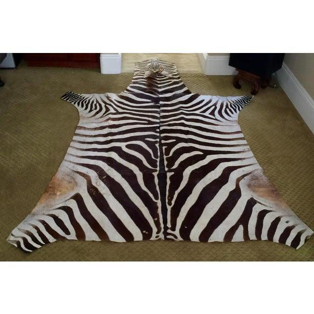 African Burchell Zebra Skin Rug - 5′10″ × 8′9″ - Image 2 of 4