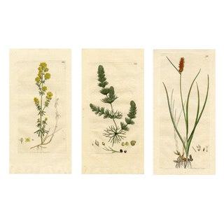 S/3 English Botanical Engravings, C. 1800