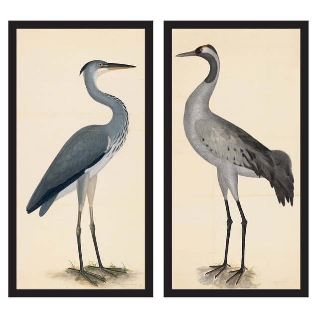 Blue Birds Prints With Roma Moulding - a Pair For Sale - Image 12 of 12