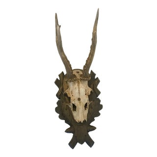 Black Forest Antlers Trophy With Leaf and Branch Decoration on Mount For Sale