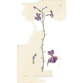 1831, Salver-Shaped Lobelia, Antique Curtis Botanical Print by William Hooker For Sale