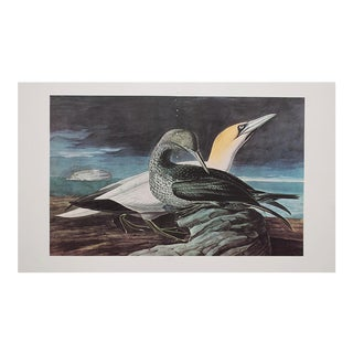 1960s Cottage Style Lithograph of a Gannet and Sempalmated Plovera by John James Audubon