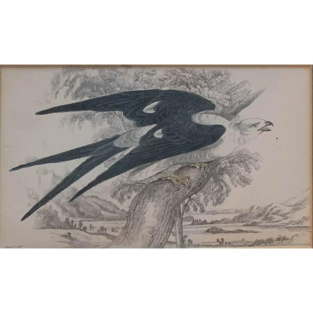 Mid 19th Century Set of 6 1840's Bird Engravings - Framed For Sale - Image 5 of 11