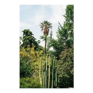 """""""California Flora"""" Original Framed Photograph"""